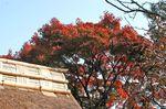 東慶寺 山門.jpg