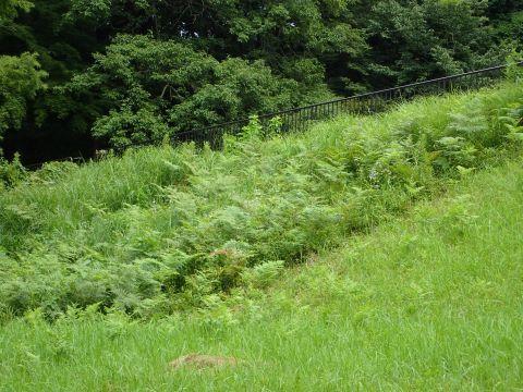 草刈りP8072998.JPG
