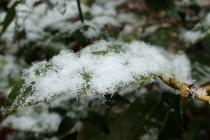 P1229967雪 (210x140).jpg
