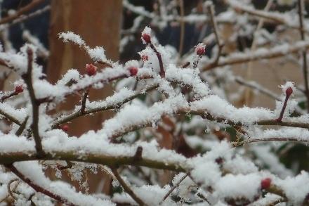 P1229977雪 (440x293).jpg