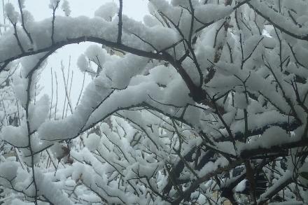P1229980雪 (440x293).jpg