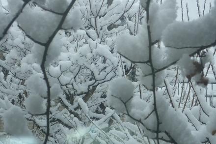 P1229982雪 (440x293).jpg