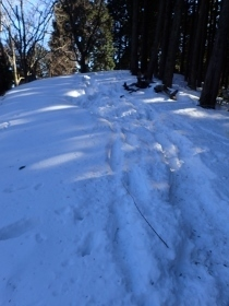 P2060420雪道 (210x280).jpg