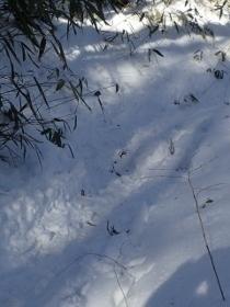 P2060466雪道 (210x280).jpg