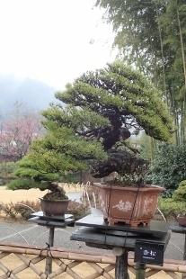 P3010015高尾駒木野庭園 (207x310).jpg