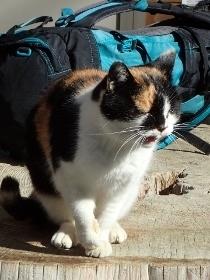 P3021376キャンプ場の猫 (210x280).jpg