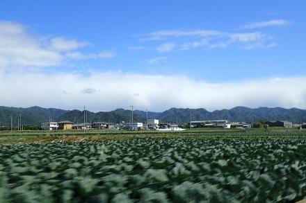 P4270451 キャベツ畑(440x293).jpg
