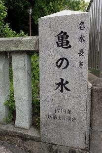 P4300623亀の水 (207x310).jpg