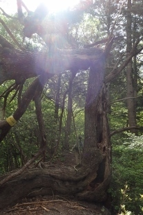 P5070934折れた木 (207x310).jpg