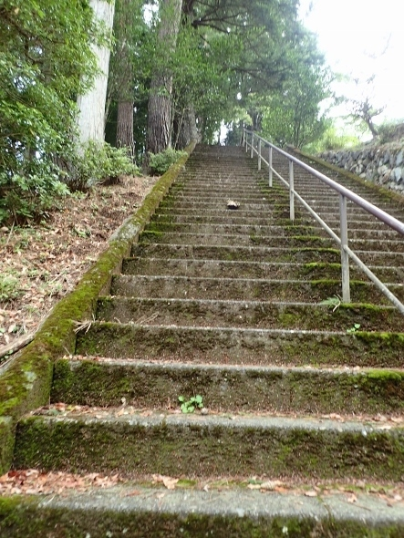 P8034930小河内神社階段 (443x590).jpg