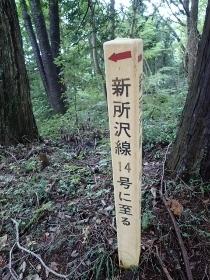 P9226353新所沢線14号へ1320 (210x280).jpg