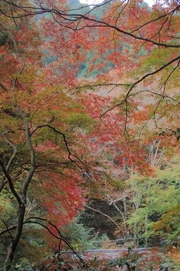 PB148578千代田稲荷参道からの紅葉 (373x560).jpg